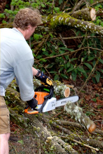 pruning a branch via chainsaw    MG 2465