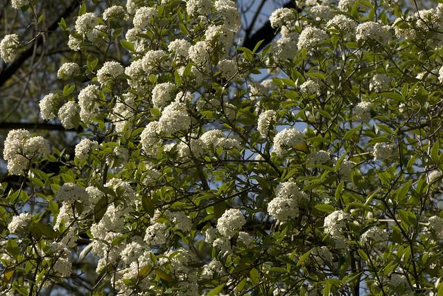 Image Result For New York Botanical