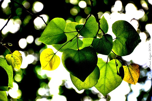 light white black detail green leaves yellow dark hearts darkness bokeh dream experiment saturation flare veins disoriented