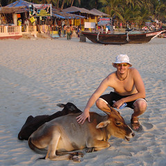 Hubers patting cows on Palolem beach, Goa, India