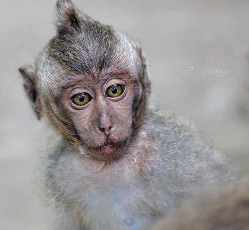 Bali - Monkey Forest - I miss u