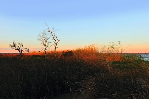 nature mississippi landscape nikon
