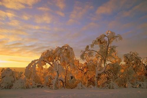 winter light sunset norway forest october arctic tana finnmark mywinners deatnu elysea