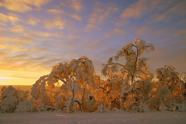 Eveninglight and winterforest..