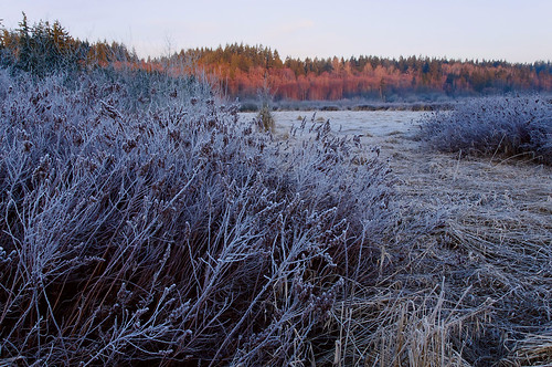 winter grass sunrise bush frost wa marsh bothell untiedstatesofamerica