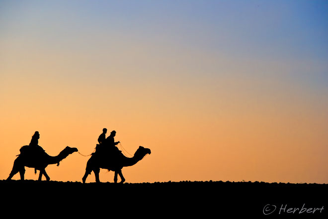 Travel and Photography: Sunset camel rides on the Thar ...