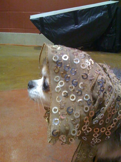 Treats Dog Boarding Louisville Ky
