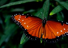 Butterfly Show 22
