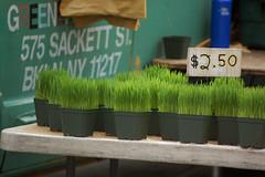 grass, wood, wheatgrass, green,
