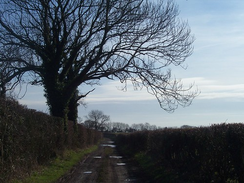 Quiet Country Lane