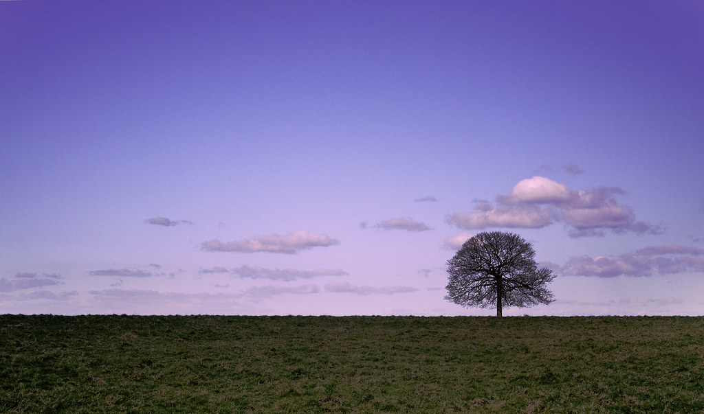 Solitary tree at Sunset