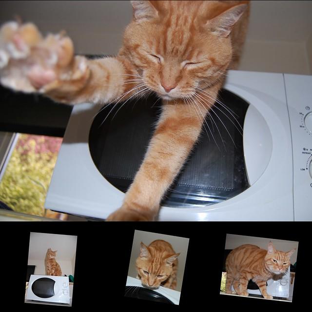 Candid Cat.