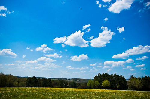 sky field clouds d70 nikond70 pennsylvania pa 2009 dandelions