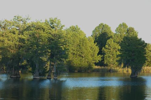 sunset lake evening calhoun cypress cypresstrees calhouncounty lakemarion santeeriver lowfalls lowfallslanding cowaseebasin