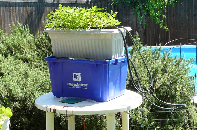 Aquaponics mini system in texas flickr photo sharing for Fish farms in texas