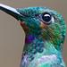 Bird Macro! by no1chrism