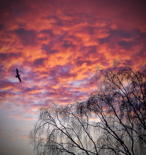 light tree bird clouds sunrise gothenburg breathtaking amazingphotography aplusphoto fujifilmfinepixs5700s700 enbrabild breathtakinggoldaward högsbohöjd