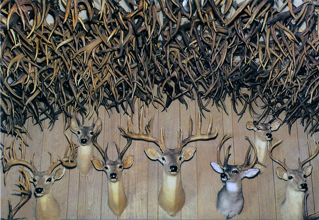 Buckhorn Hall Of Horns San Antonio Tx Flickr Photo