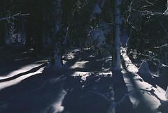 Wandering around