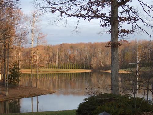 trees lake nature