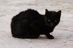 Basement Cat Cares