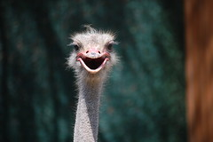 Talking With an Ostrich