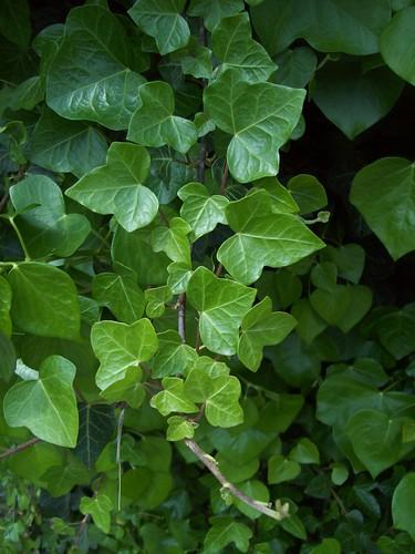 Pr paration d 39 un macerat pour le corps for Plante amincissante