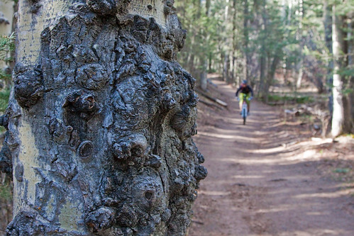 Santa Fe Mountain Biking