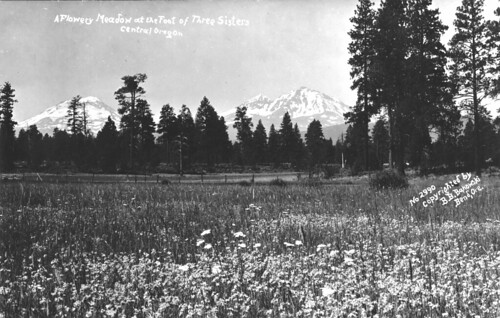 Flowery meadow at the foot of the Three Sisters in central Oregon