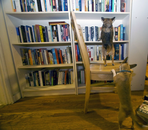 dog Topper helps Mole with his book selection