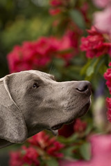 Smelling the flowers...