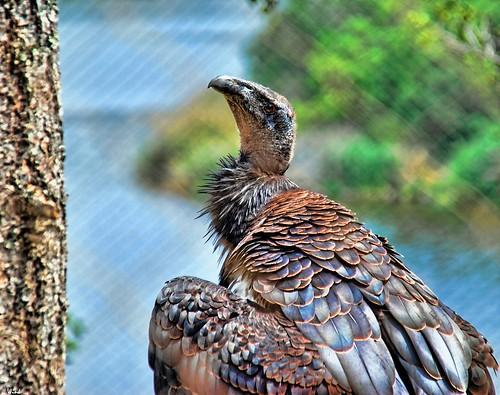 gorgeous explore condor santabarbarazoo 283 sigma18200 nikond80