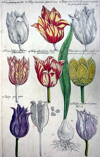 Evoloution of the art of botanical illustration