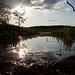 Swamp/Pond