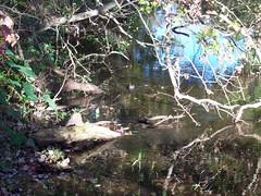 Sawgrass Lake Bird in Water