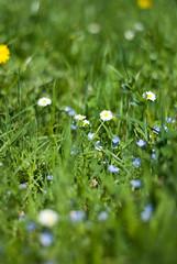 photowalk IV: daisies