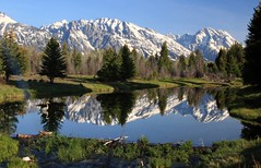 Grand Tetons reflected in a pond near Schwabacher Landing