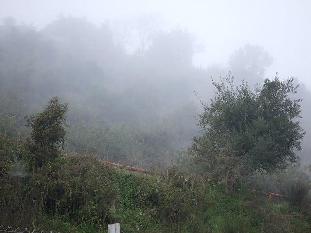 Niebla desde casa