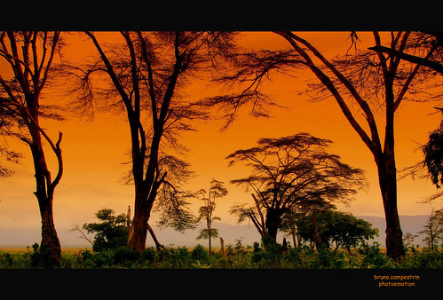 africa trees panorama plants nature alberi landscape tanzania view natura vista ngorongorocrater veduta soe unescoworldheritage vulcano ohhh volcan fiatlux vegetazione blueribbonwinner zarafa passionphotography abigfave worldbest anawesomeshot colorphotoaward ysplix arusharegion brilliant~eye~jewel colourartaward acaciaafricana africanacacia riservanaturalengorongoro ngorongoroconsevationarea crateredingorongoro pianuraserengeti patrimonioumanitàunesco overtheshot goldenheartaward dragondaggerawards artofimages cffaa flickrclassique bestcaptureaoi superstarthebest