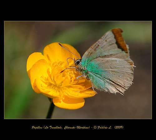 Un Petit Papillon - A Little Butterfly (4)