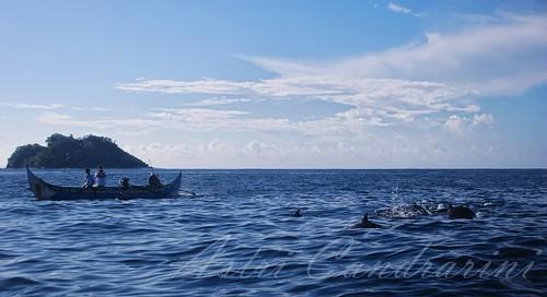 sumatra indonesia natural dolphins lampung kiluan telukkiluan