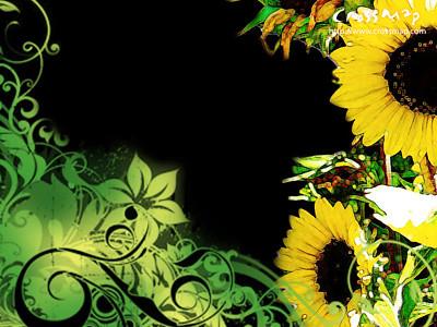 Wallpaper Background Black on Christian Backgrounds Wallpaper   Sunflower   Flickr   Photo Sharing