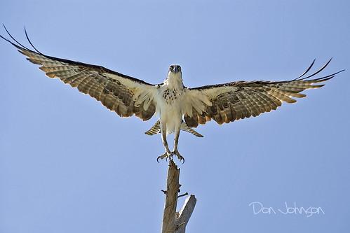 grande lift away off boca osprey