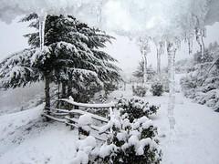 WINTER  ( SNOW )
