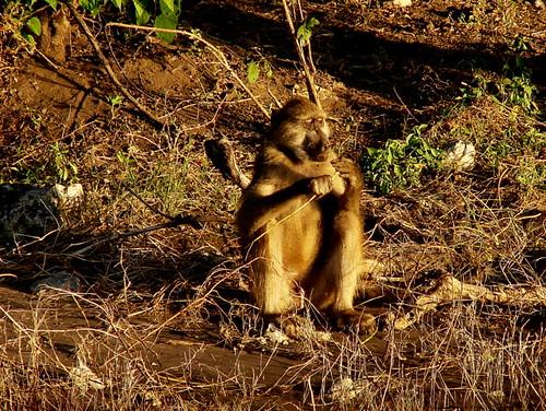 Hungry in Botswana by @heidenstrom