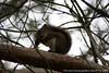 Annapolis Marsh - Wildlife