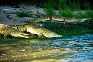 Nasty Crocs
