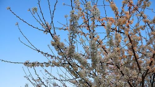 flowers sky tree sunrise spring