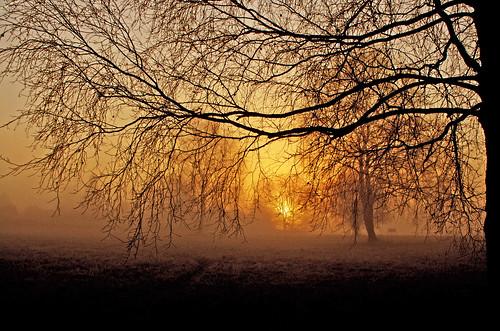 morning trees mist misty fog sunrise denmark dawn foggy silhouettes april soe blueribbonwinner platinumphoto theperfectphotographer 100commentgroup alittlebeauty travelsofhomerodyssey