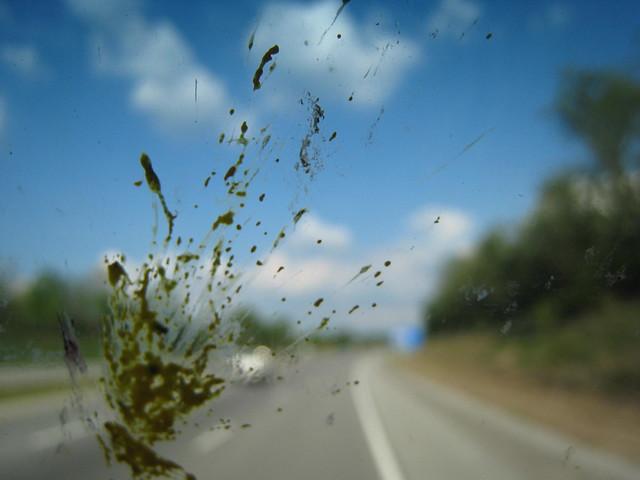 Bug Splatter 6
